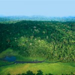À la poursuite du Gabon vert