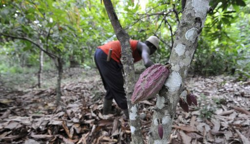 Cacao ivoirien: production record d'1,5 million de tonnes malgré la crise