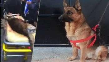 le chien policier heros