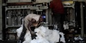 Coton : où se trouvent les principaux producteurs africains ?