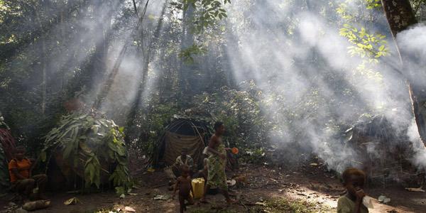 Environnement : une initiative pour restaurer 100 millions d'hectares de forêts d'ici 2030