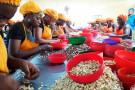 L'unité artisanale de Toumodi, gérée par la coopérative Ekreyo avec l'appui d'Olam, emploie 350 ouvrières.