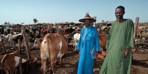Bergers peuls à Niamana Garbal, l'immense marché au bétail à l'entrée de Bamako, le 1er juin 2016.