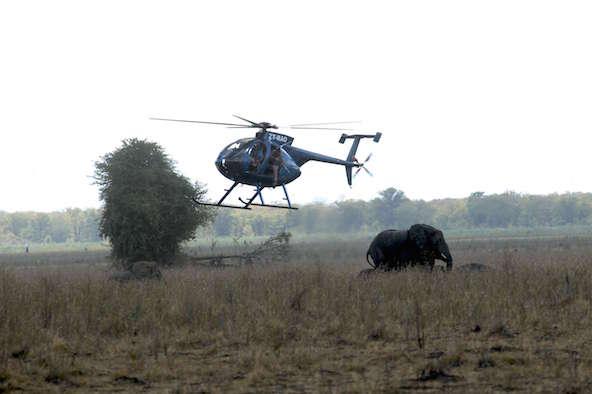 Un éléphant vient de se faire injecter une dose sédative depuis un hélicoptère dans le parc national de Liwonde, dans le sud du Malawi.