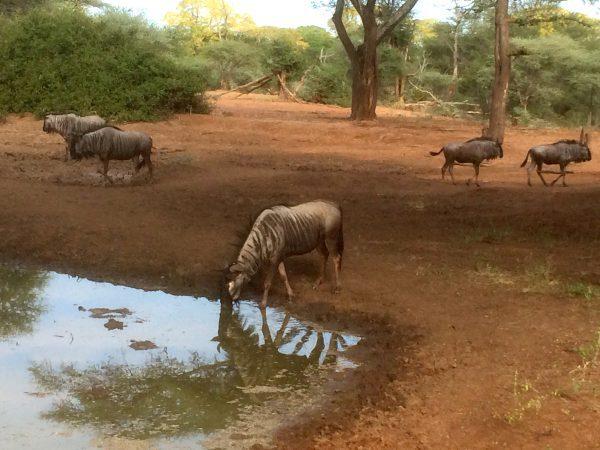 Vue d'une réserve animalière.