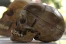 Des crânes de Hereros et Namas victimes de l'oppression du colonisateur allemand, exposé à Berlin le 29 septembre 2011.