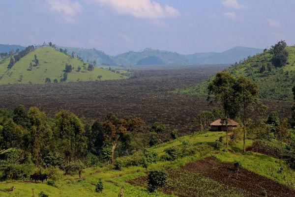 Vue d'une forêt de RDC brûlée tous les ans pour fournir du charbon de bois, prise le 27 janvier 2015.