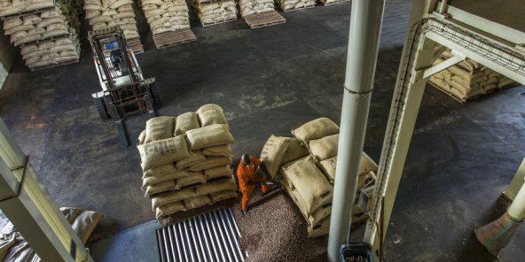 Côte d'Ivoire : un syndicat de planteurs va attaquer en justice le Conseil café-cacao