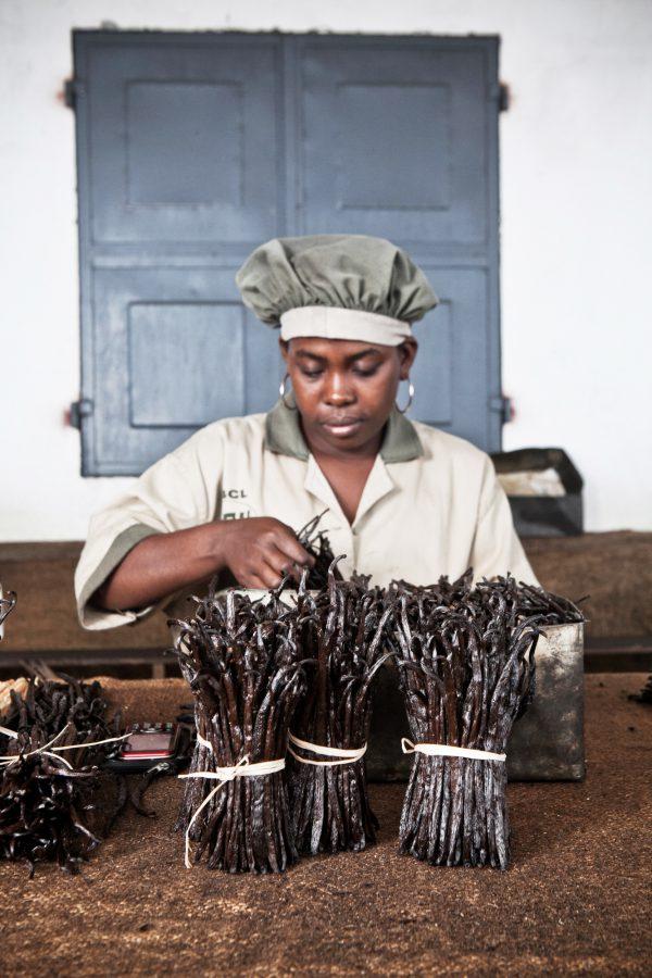 Le tri des gousses s'effectue en fonction de leur longueur, de leur qualité et de leur couleur (usine AFH Export, à Sambava).