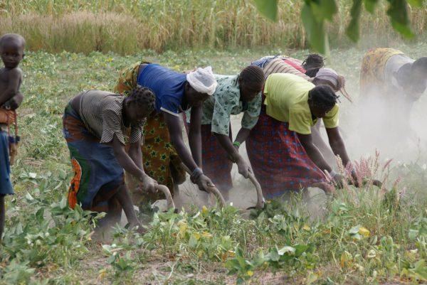 L'agriculture reste le premier contributeur au PIB burkinabé. Ici à proximité de Bobo Dioulasso.