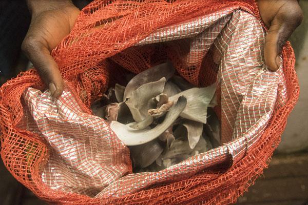 Des ailes de requins saisies sur un navire chinois par les autorités guinéennes