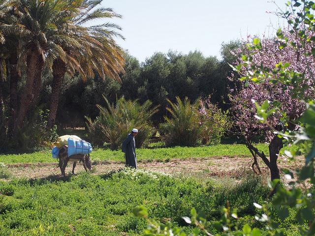 Oasis Tinghir, au Maroc.
