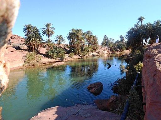 Oasis de Tiout, dans le sud algérien.