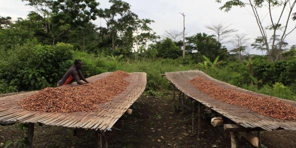 Cacao : la Côte d'Ivoire veut bloquer sa production à 2 millions de tonnes 1