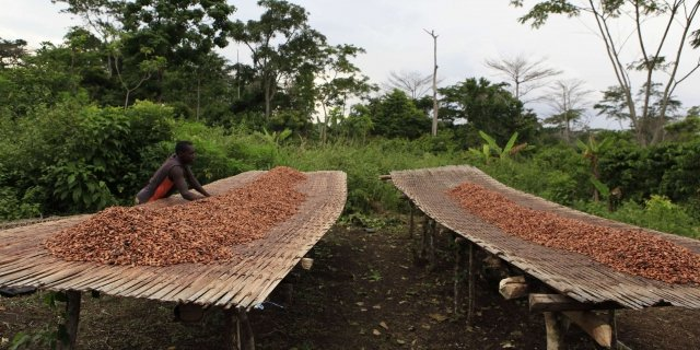 Cacao : la Côte d'Ivoire veut bloquer sa production à 2 millions de tonnes