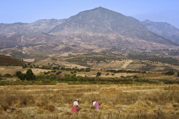 Paysannes aux champs près de Chefchaouen, dans le Rif (Maroc).