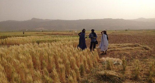 nouvel variété de blé 2017