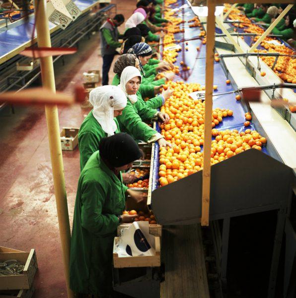 Le secteur agricole représente 14% du PIB du pays.Ici, dans la station de conditionnement de Berkane.