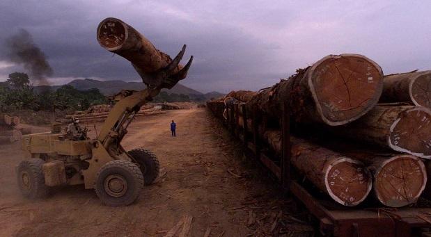 Exploitation de bois au Gabon (photo d'illustration).