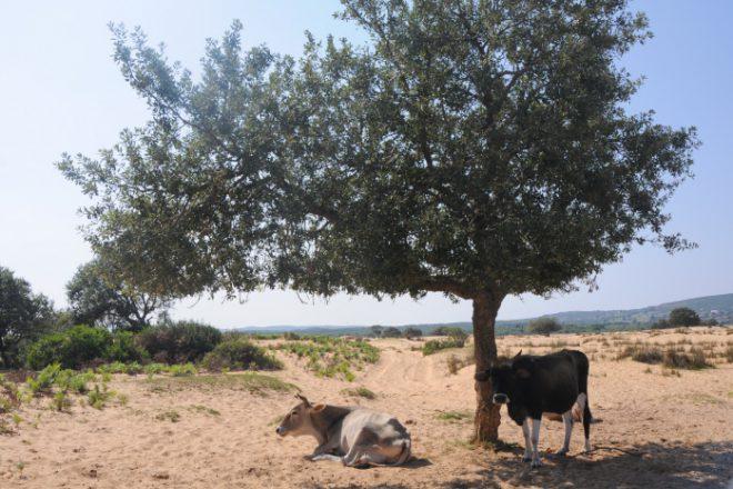 http://www.jeuneafrique.com/552827/economie/tunisie-la-greve-du-lait-naura-pas-lieu-avant-la-fin-du-ramadan/