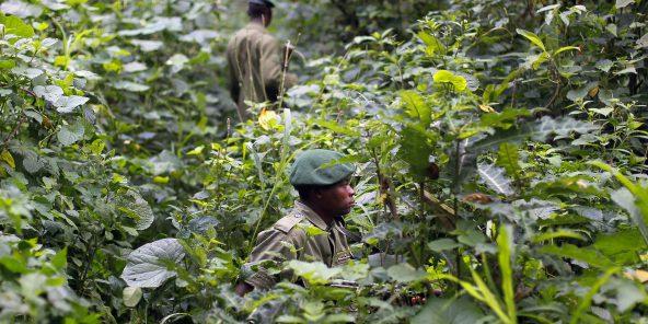 Des rangers en train de patrouiller dans le parc national des Virunga, en RDC, le 12 août 2012.