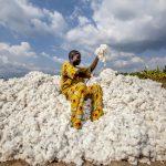 Attade Gantoli, un fermier qui cultive du coton biologique au Bénin
