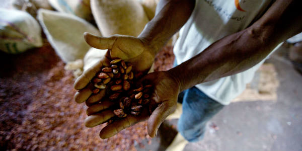 Cacao en Côte d'Ivoire.