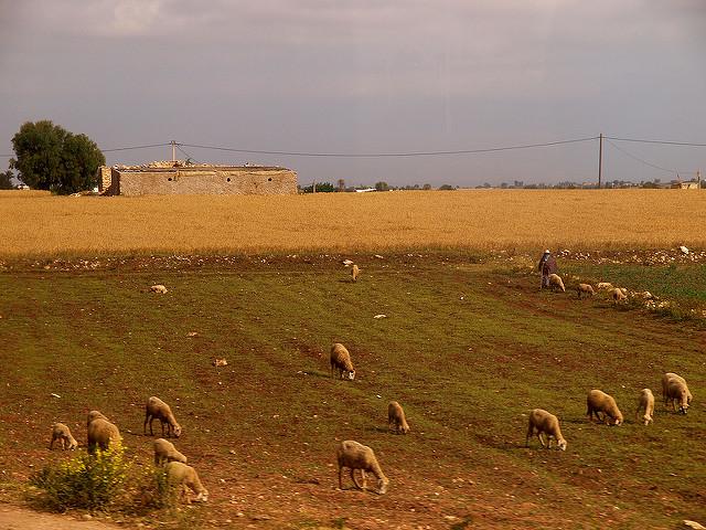 Terres marocaines entre Casablanca et El Jadida.