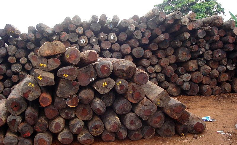 Stocks illégaux de bois de rose à Antalaha, à Madagascar.