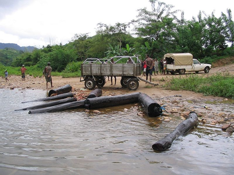 Du bois de rose illégalement coupé dans le parc national de Marojejy, à Madagascar.