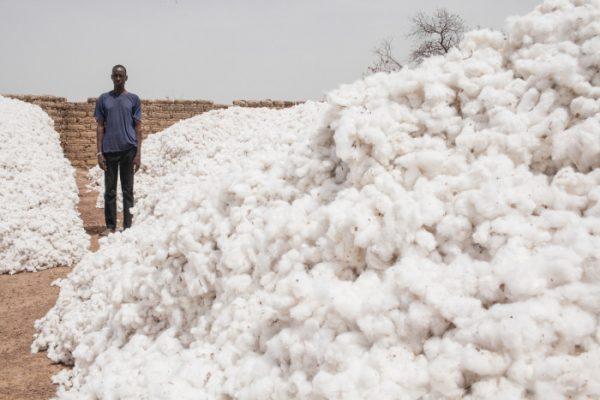 Un producteur de coton, au Burkina Faso
