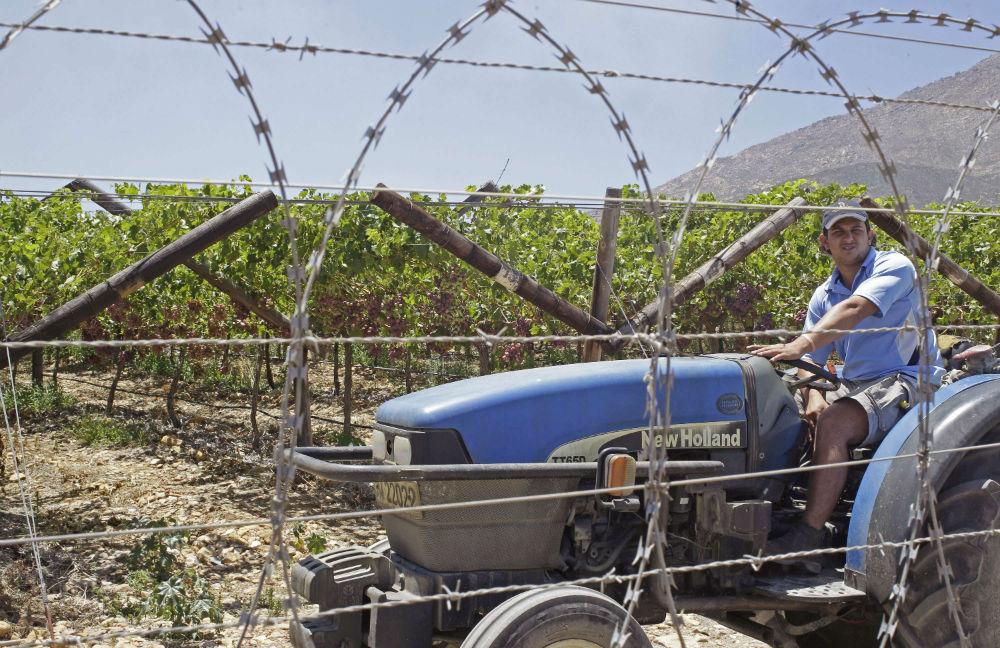 Dans une exploitation agricole pr-s de De Doorns, en Afrique du Sud.