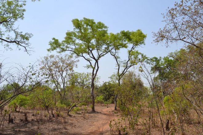 Au Burkina, polémique sur un projet d'hôpital financé par la Chine dans la forêt classée de Kua