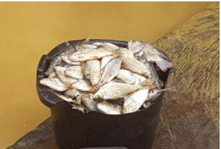 Bassine de poissons ramassés par un membre de la communauté du village Mbilaten, près du lac Nkoghé et destinés à la commercialisation.