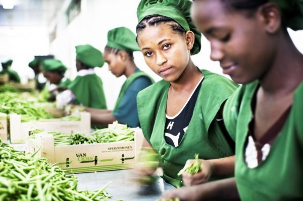 L'Éthiopie aussi vise les marchés européens (ici à Addis-Abeba, tri de haricots destinés aux Pays-Bas).