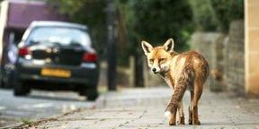 À Londres, la nature sauvage reprend parfois ses droits.