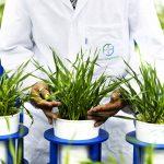 Grâce au rachat de Monsanto, le groupe pharmaceutique allemand Bayer avance ses pions sur le continent. Ici l'un de ses centres de R&D, à Francfort, en juin.