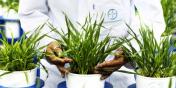 Agriculture : graines d'avenir