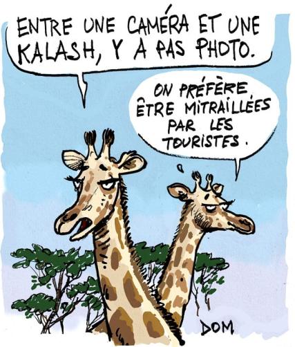 Les girafes au Niger sont un des moyens d'attirer les touristes.