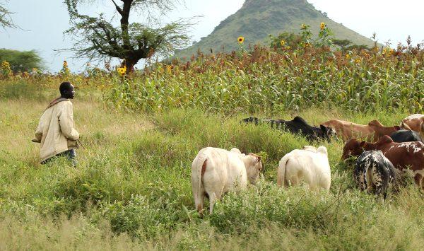 Le Tchad ets l'un des principaux pays d'élevage du continent. Il est aussi réputé pour la qualité de sa viande.