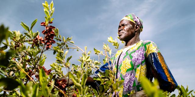Burkina Faso : la Banque mondiale approuve un prêt de 200 millions de dollars pour l'agriculture