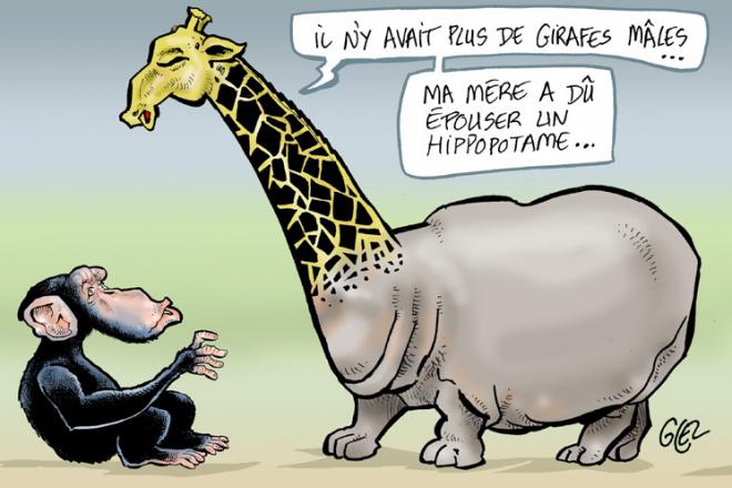 [Chronique] Sale temps pour la faune africaine