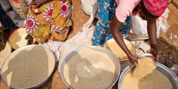 Le Bénin importe 425 000 tonnes de riz blanchi principalement du continent asiatique