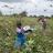 La fille d'un agriculteur tente de chasser des criquets d'un champ, au Kenya, le 22 janvier 2020
