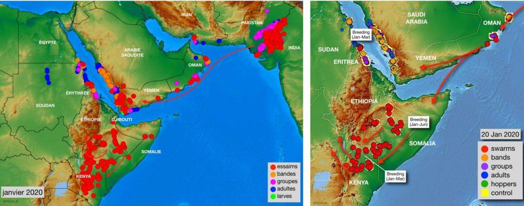 Carte de la propagation des essaims de criquets pèlerins à la Corne de l'Afrique.