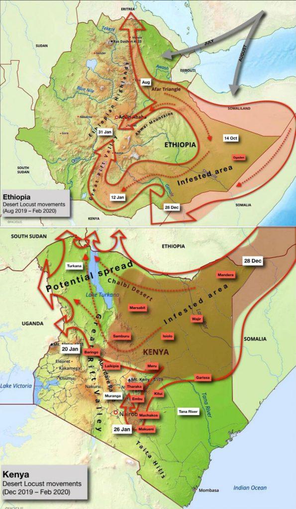 Carte de la propagation des essaims de criquets pèlerins en Ethiopie et au Kenya.