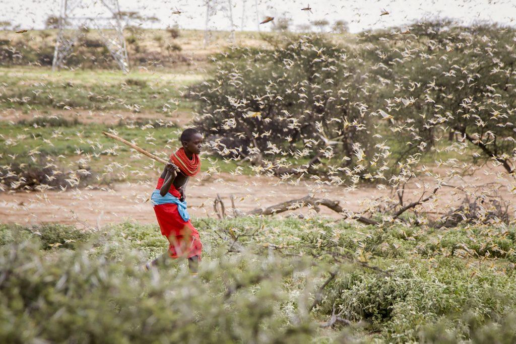 Cette invasion de criquets est la plus importante au Kenya depuis 25 ans.
