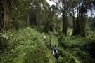 Des touristes marchent à travers la forêt dense dans le Parc National des Volcans, au nord du Rwanda, en 2015.