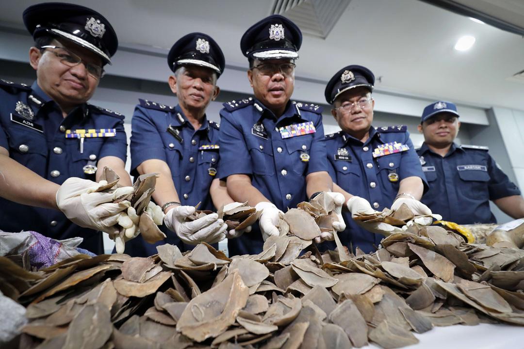 Des écailles de pangolin saisies par les douanes en Malaisie, en août 2017.