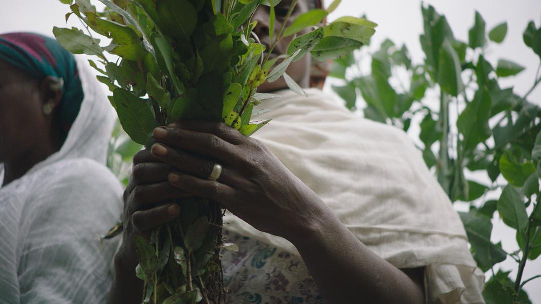 «The Great Green Wall» traite du projet écologique de la Grande Muraille Verte, qui traverse le Sahel.